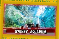 MASSES Arena Sidney Aquarium