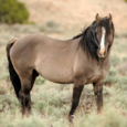 Mustang zoo