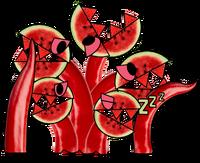 Melonmaw
