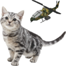 Nintendogs cat and helicopter
