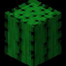 MP Cactus