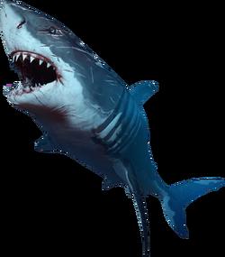 SharkBossFOL