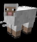 MP Sheep