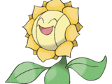 Sunflora