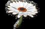 FlowerGliderMKS