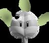 Skunk Leaf
