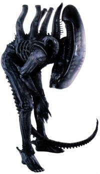 Xenomorph2