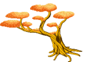 Bonsai Tree Bad