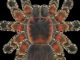 Tarantula (Animal Crossing)