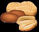 Nuts nintenzoo