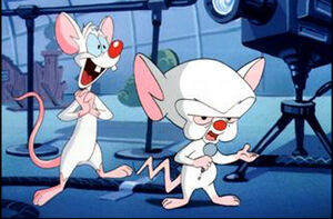 965792-pinky and the brain