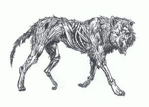 Zombie Wolf by LLawlietDeathNote