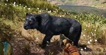 2 leon negro raro