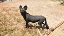 1 perro salvaje negro raro