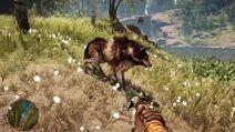 2 lobo rayado raro
