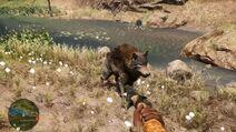 2 lobo