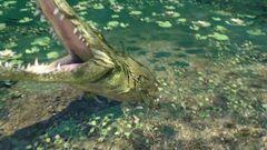 Farcry3Crocodile-620x350