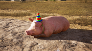 FC5 Pig