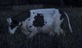 Fc5 cow bw night.jpg