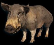 FC3 cutout pig