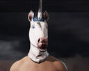 Fc5 mask unicorn male