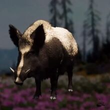 Boar Far Cry Wiki Fandom