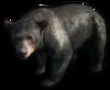 FC3 cutout asianblackbear