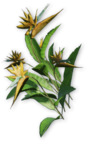 FC3 cutout heliconia