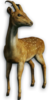 FC3 cutout deer