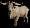 FC3 cutout goat
