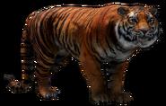 FC4 Animal (2)
