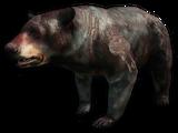Бессмертный медведь