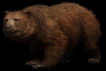 Himalayan Brown Bear