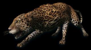 FC3 cutout leopard