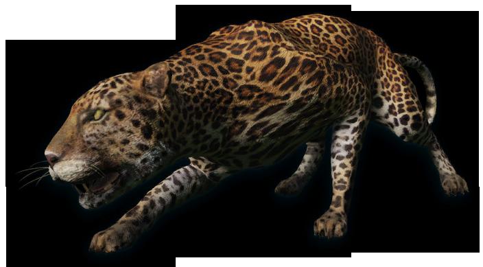 Felidae | Far Cry Wiki | FANDOM powered by Wikia