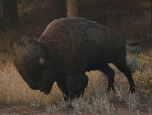 Bison in Far Cry 5