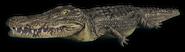 FC3 cutout crocodile