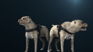 Far cry 3 pitbull by nniy-d8s8jkg
