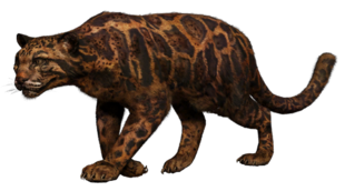 Shadow Leopard