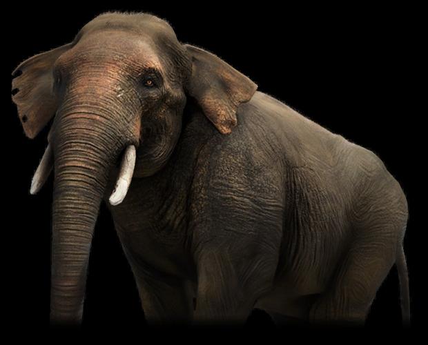 Elephant Far Cry Wiki Fandom