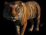 Животные Far Cry 3