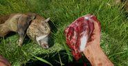 2156131-hunting boar far cry 3
