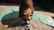 Far Cry® 5 20180402025538