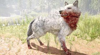 Snowblood Wolf