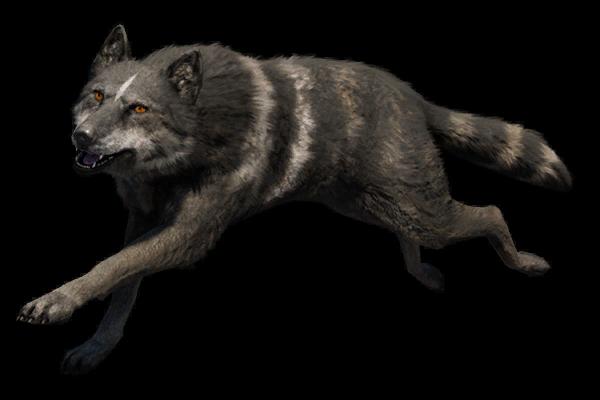 Canidae Far Cry Wiki Fandom