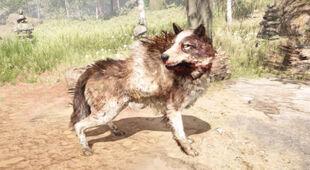 Stripe Wolf