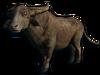 FC3 cutout buffalo