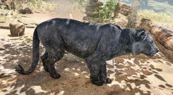 Black Cave Lion