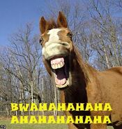 021 horse bwahahaha