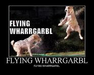 Flying wharrgarbl
